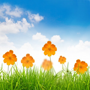 indebolimento primavera